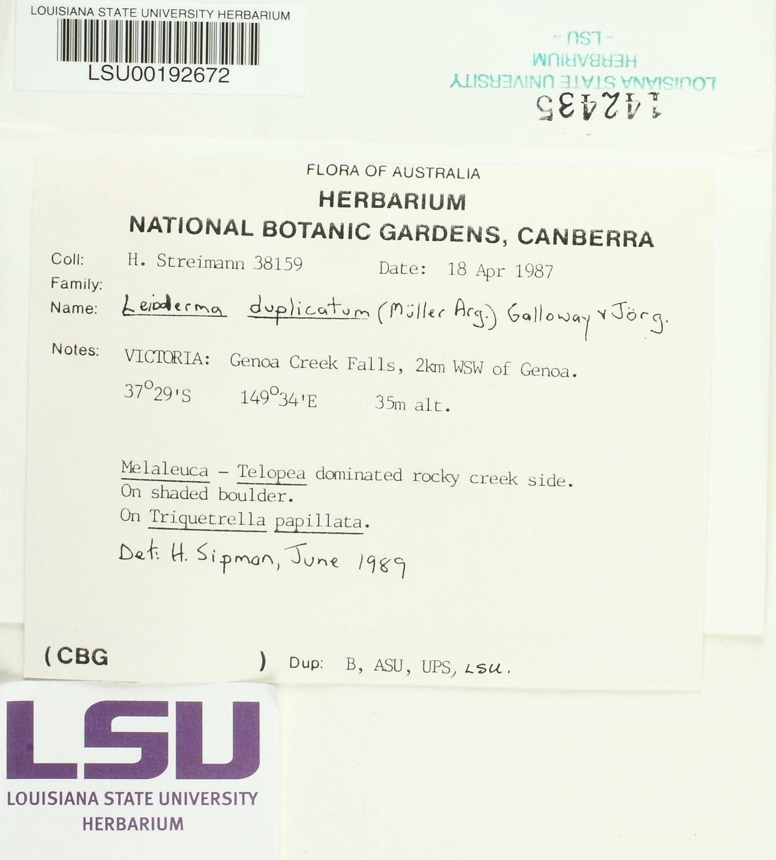 Leioderma duplicatum image
