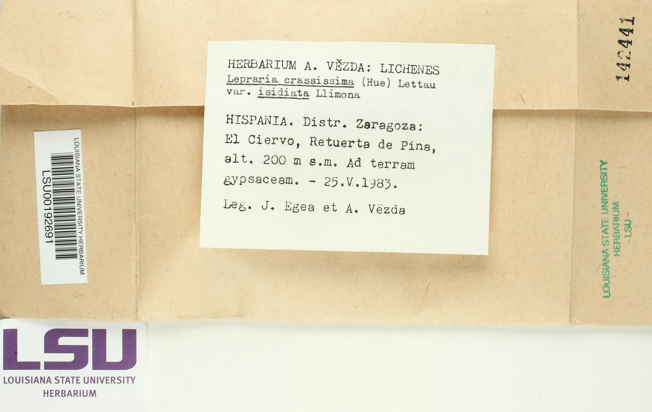Lepraria crassissima image