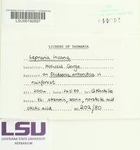 Lepraria incana image