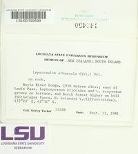 Lepraria arbuscula image