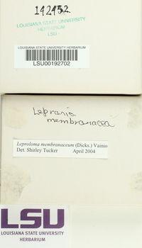 Lepraria membranacea image