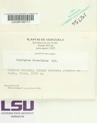 Leptogium foveolatum image