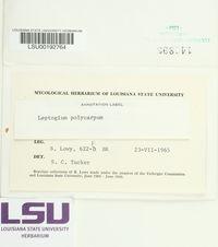 Scytinium polycarpum image