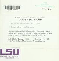Leptogium saturninum image