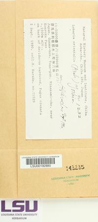 Lobaria orientalis image