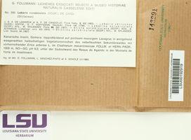 Lobarina scrobiculata image