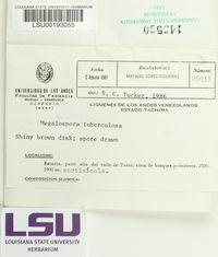 Megalospora tuberculosa image