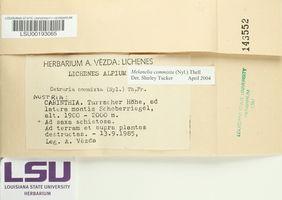 Cetrariella commixta image
