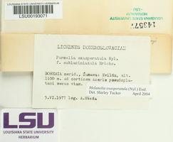 Melanohalea exasperatula image