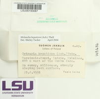 Melanelia hepatizon image