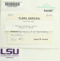 Brianaria sylvicola image