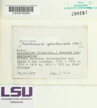 Protothelenella sphinctrinoidella image