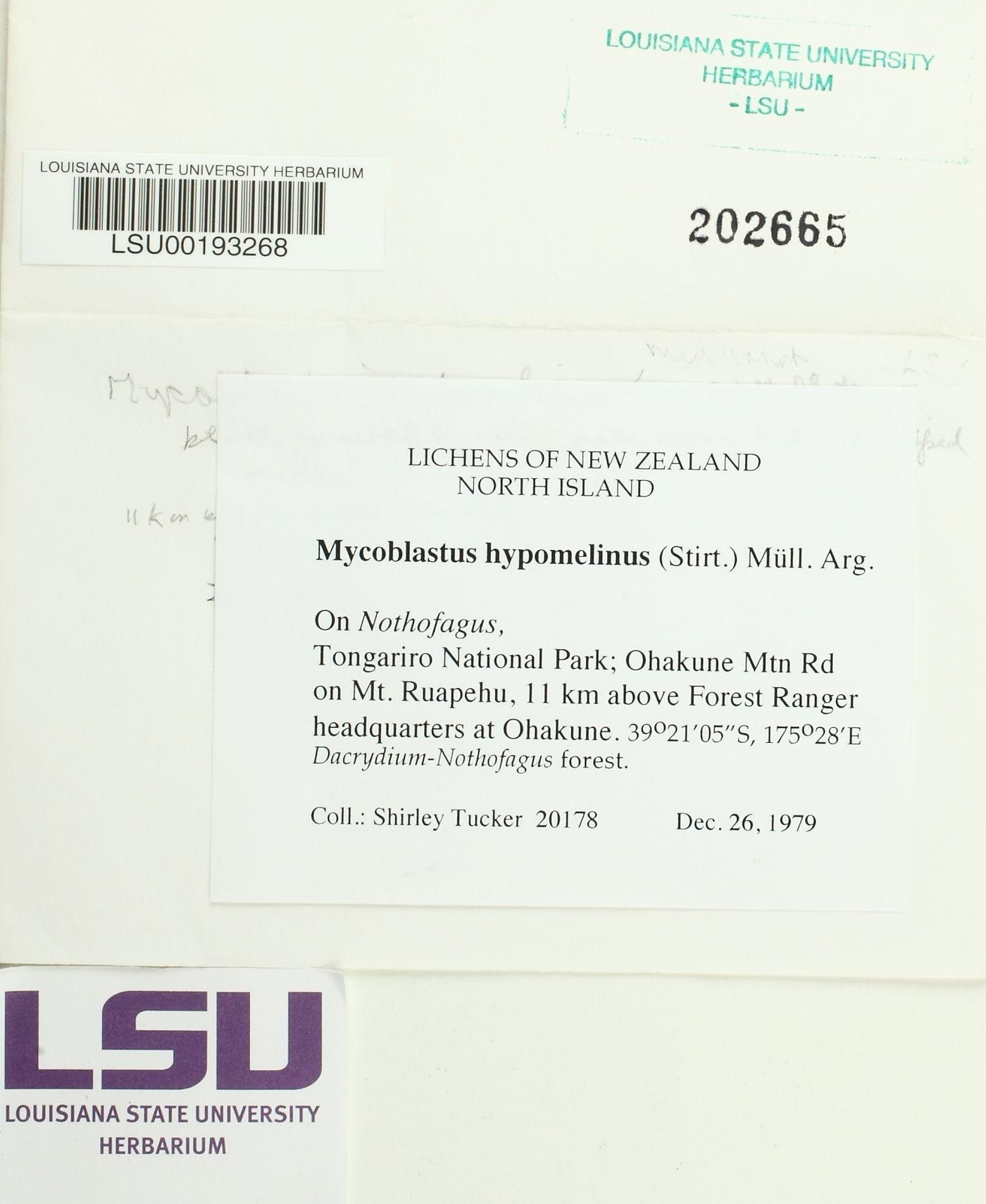 Mycoblastus hypomelinus image