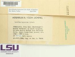 Bryobilimbia hypnorum image