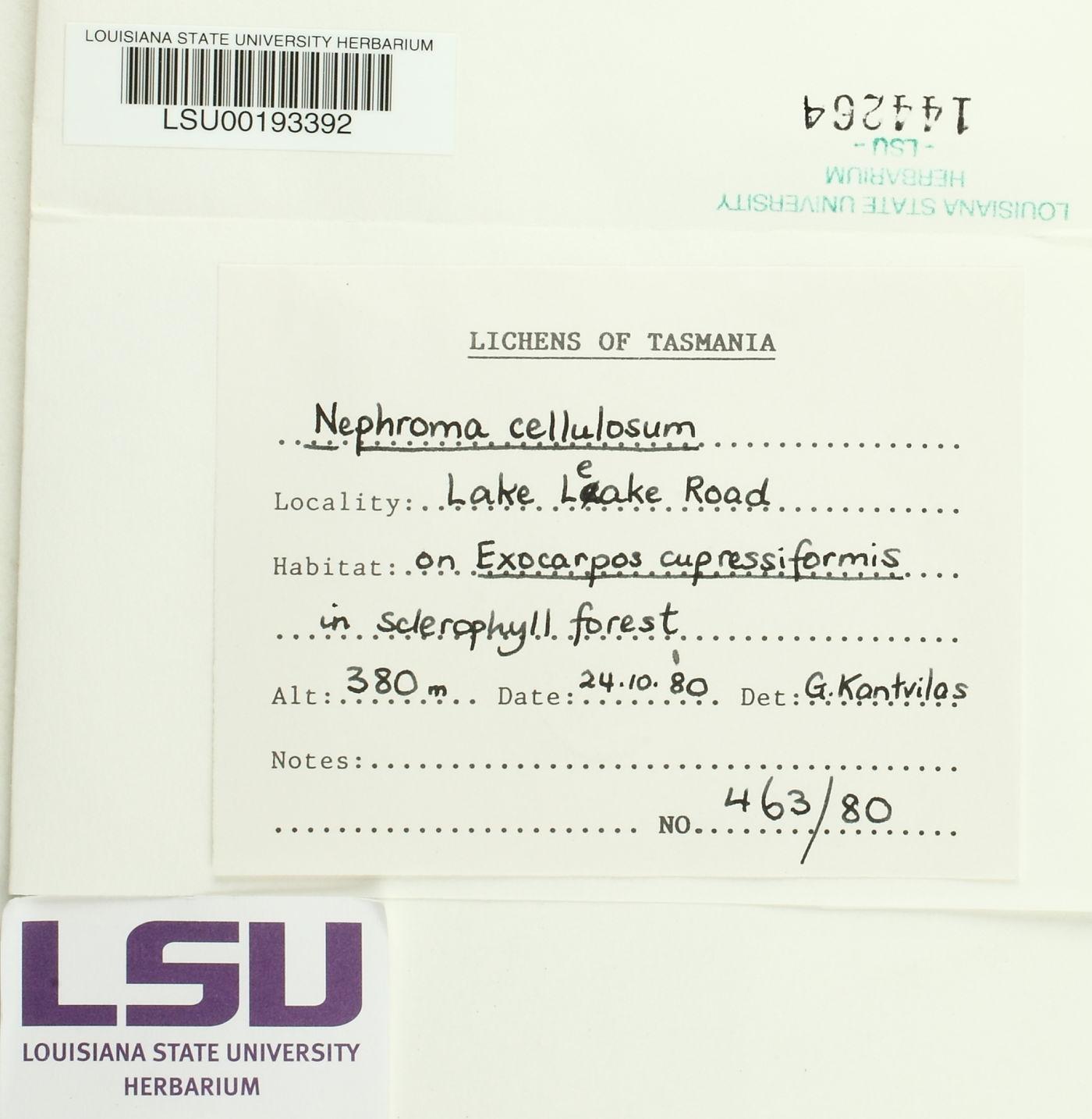Nephroma cellulosum image