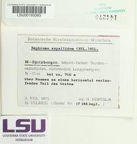 Nephroma expallidum image