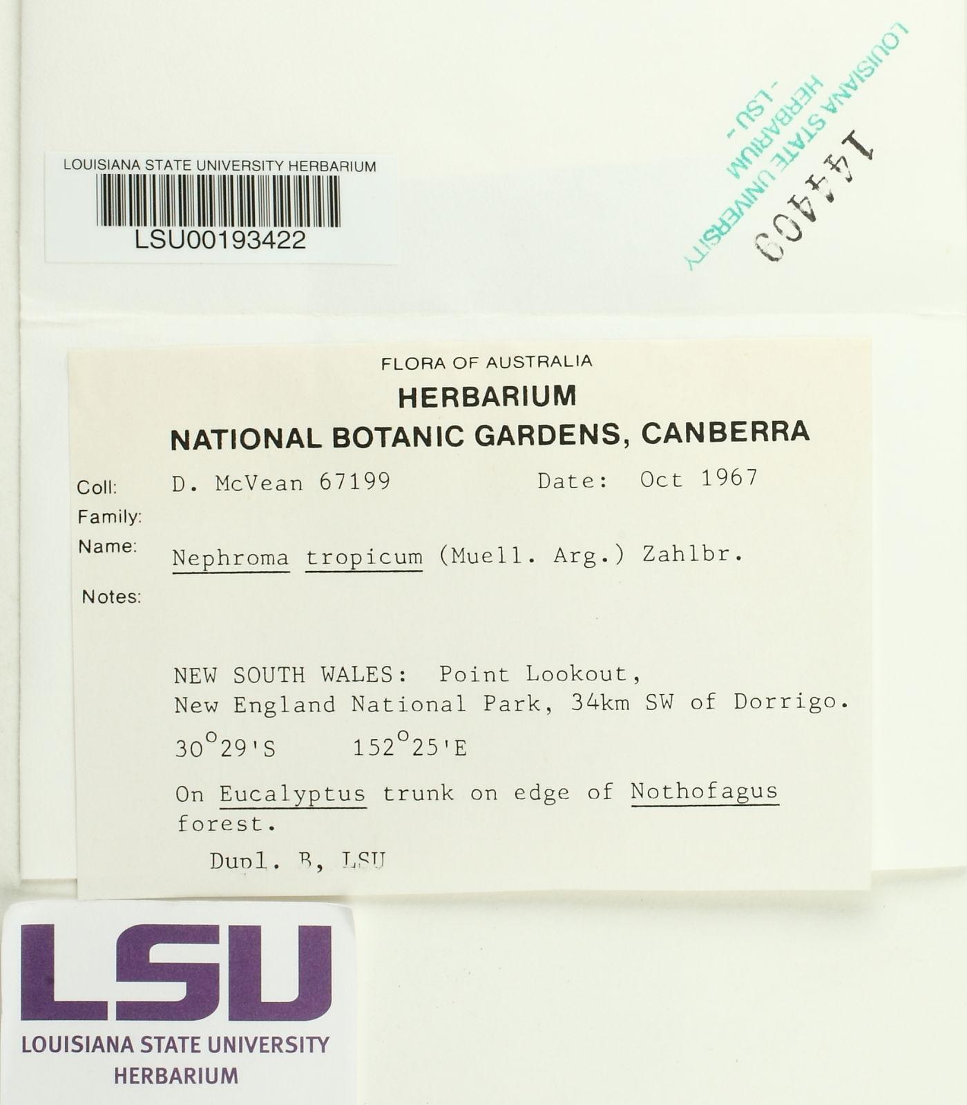 Nephroma tropicum image