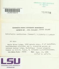 Ochrolechia xanthostoma image