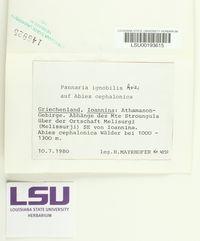 Image of Fuscopannaria ignobilis