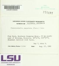 Pannoparmelia angustata image