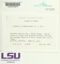 Parmelia omphalodes image
