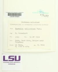Image of Parmelinella wallichiana