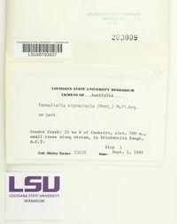 Parmeliella nigrocincta image