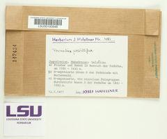 Parmelina pastillifera image