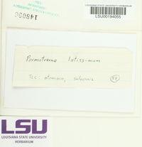 Parmotrema latissimum image