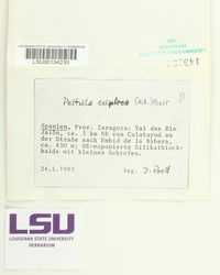 Peltula euploca image
