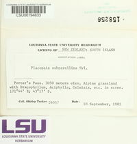 Image of Placopsis subparellina