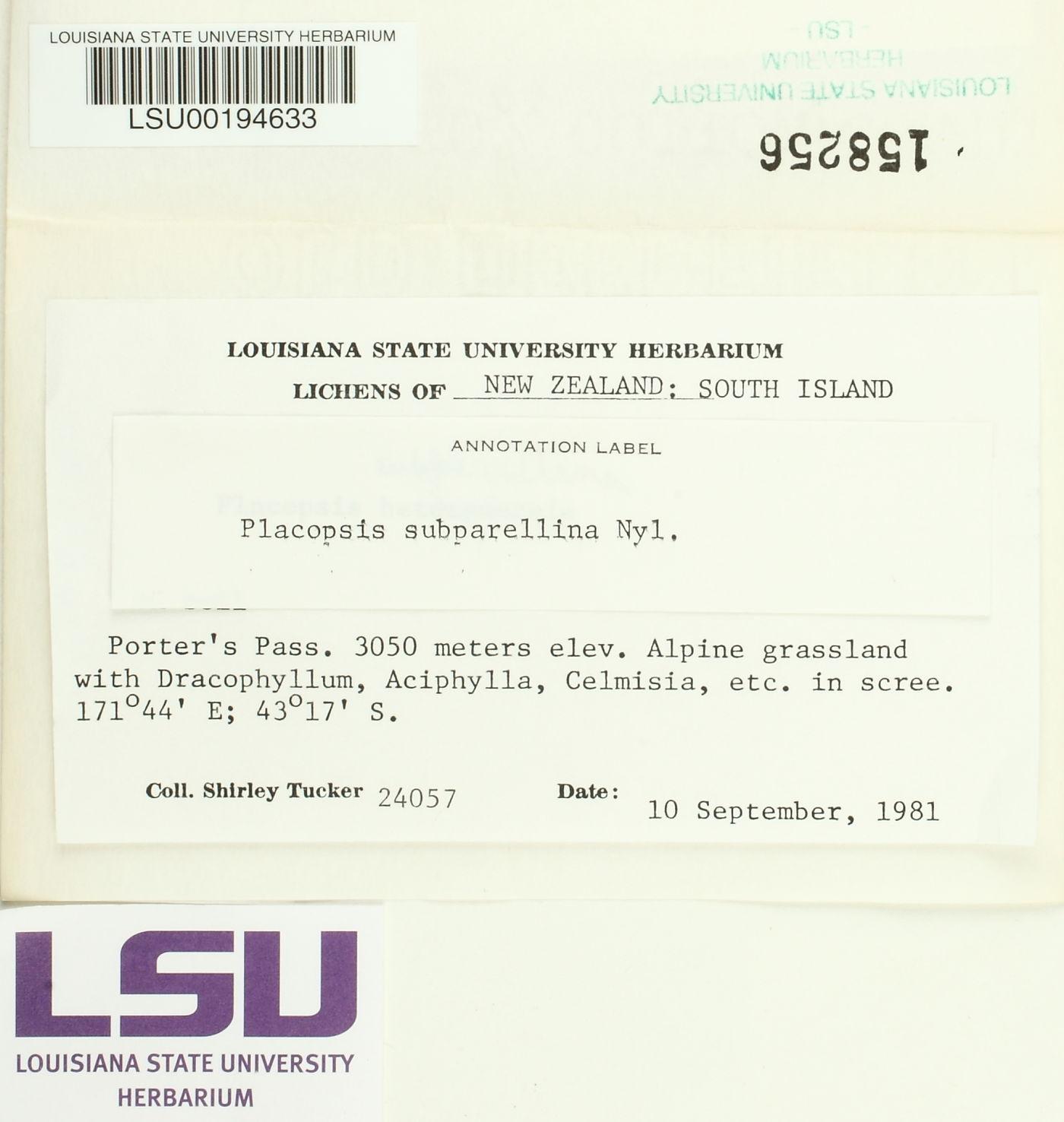 Placopsis subparellina image