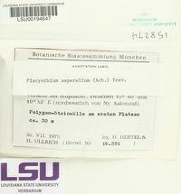 Placynthium asperellum image