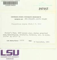 Placynthium nigrum image