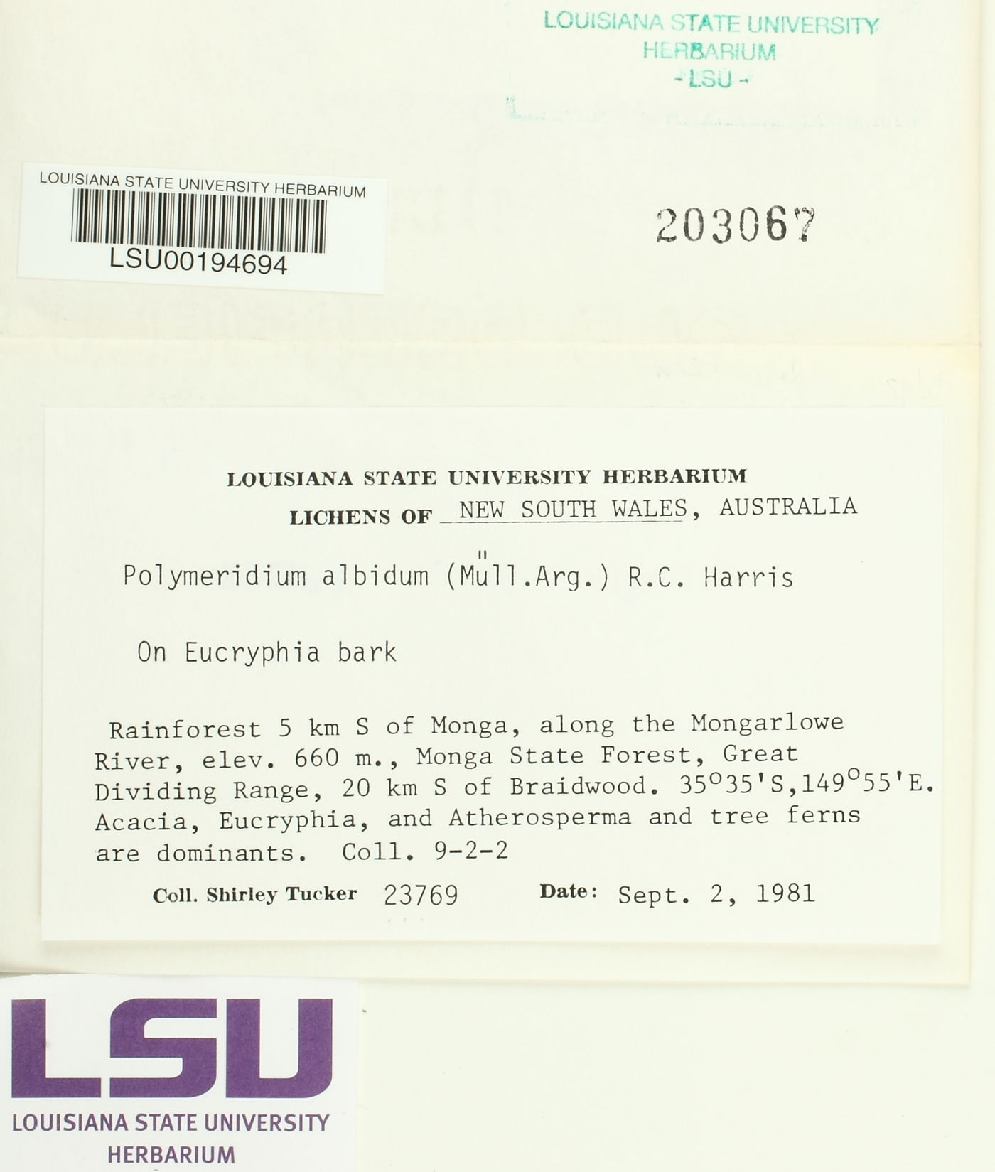 Polymeridium albidum image