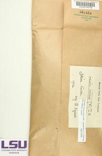 Porpidia macrocarpa image