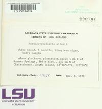 Pseudocyphellaria allanii image
