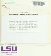 Pseudocyphellaria crassa image