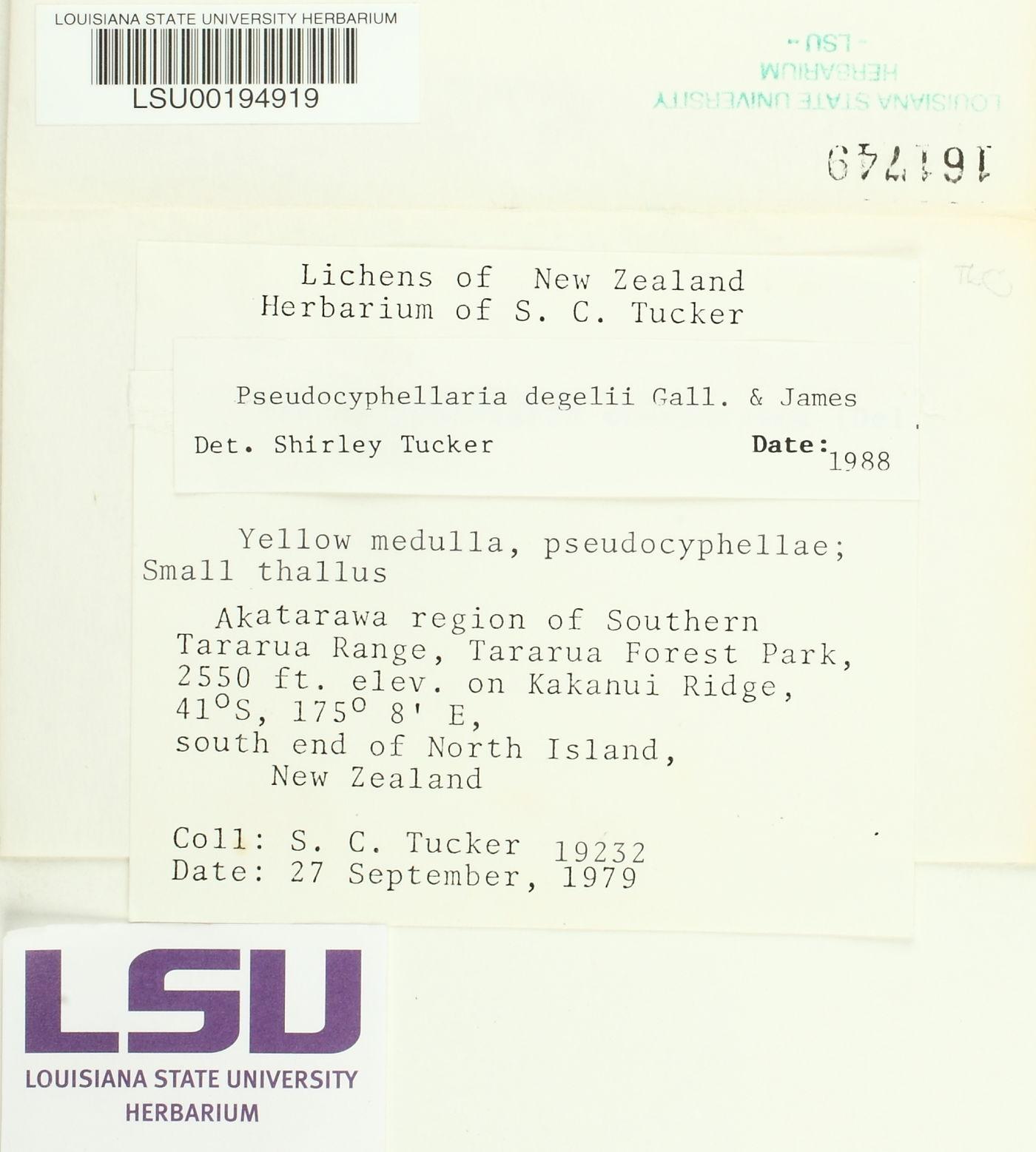 Pseudocyphellaria degelii image