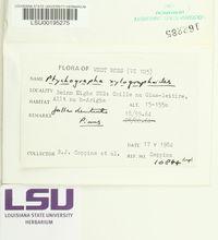 Image of Ptychographa xylographoides
