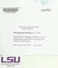Phaeophyscia adiastola image