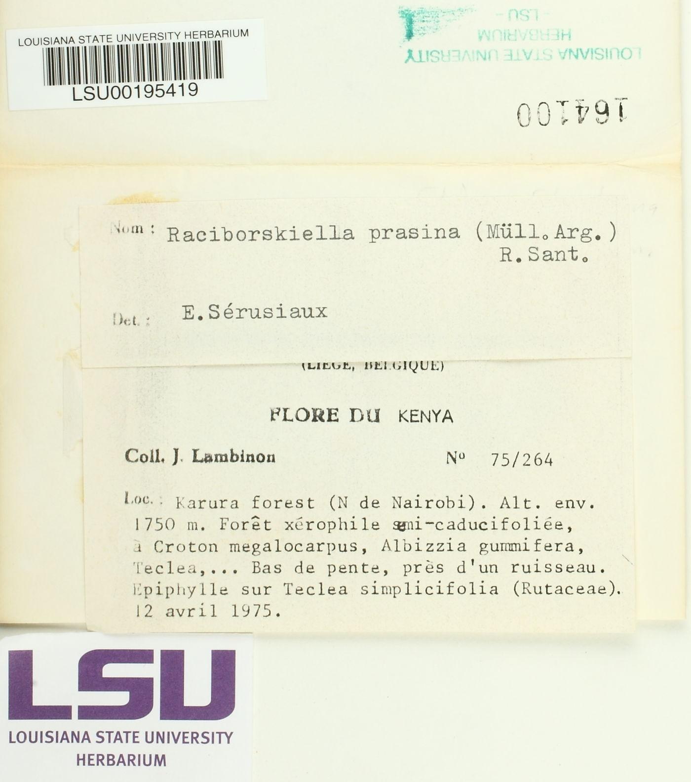 Strigula prasina image