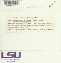 Rhizocarpon alpicola image
