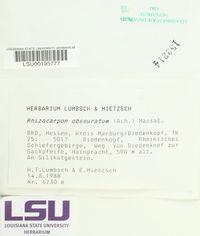 Rhizocarpon obscuratum image