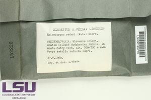 Rhizocarpon oederi image