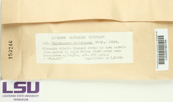 Rhizocarpon viridiatrum image