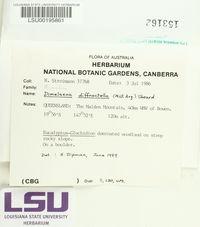 Image of Dimelaena tenuis