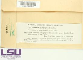 Roccella galapagoensis image