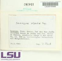Image of Sarcogyne algerica