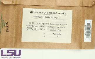 Polysporina lapponica image
